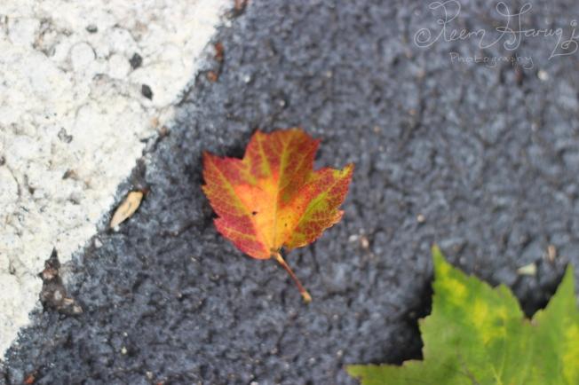 autumn leaf photography